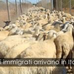 Altri immigrati arrivano in Italia
