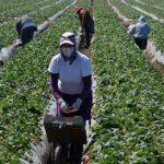 La COOP offre immigrati: lavorano tanto e costano poco